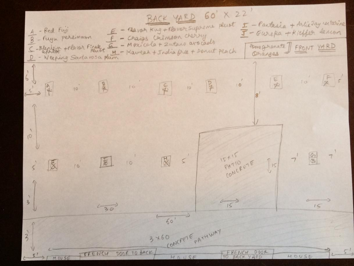 new backyard orchard layout feedback please dave wilson
